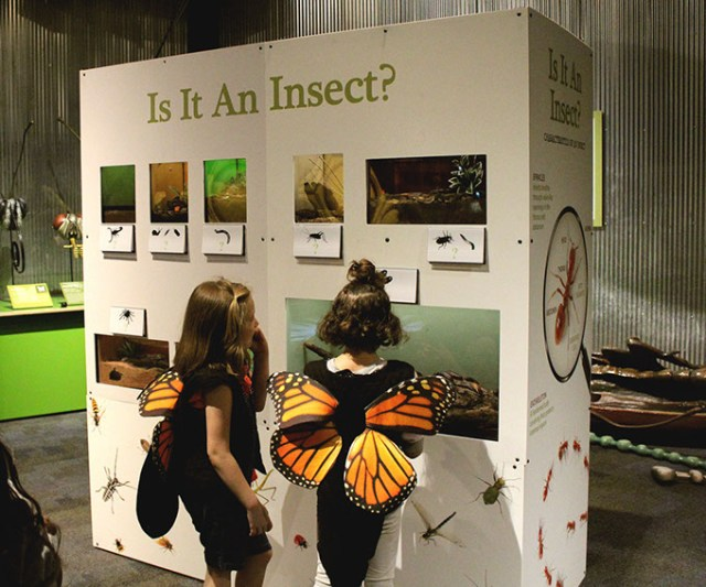 SMO's <em>Backyard Bugs</em> exhibit features detailed, larger-than-life insects and related activities. (Science Museum Oklahoma / provided)