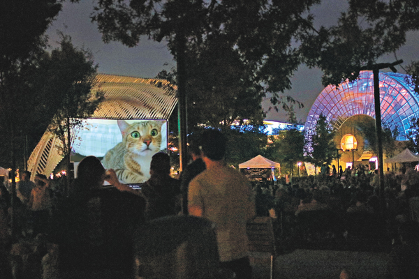 Cats get a big-screen showcase Saturday at Myriad Botanical Gardens' annual Cat Video Festival. (provided)