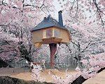 和の極み。桜木の中にある茶屋が幻想的でスゴすぎる。