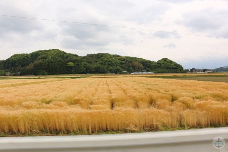 糸島市『白糸の滝』への道中