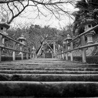 名護中央公園2016-桜まつり