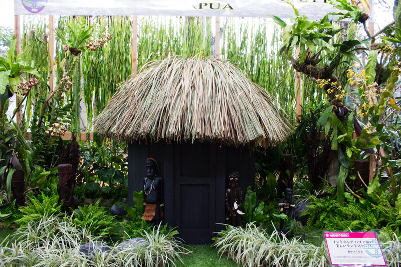 インドネシア パプア州の美しいランドスケープ「森がつくる美」
