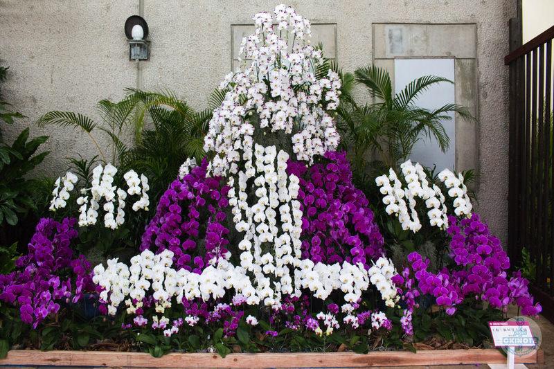 (有)新垣洋らん園「春の訪れ」