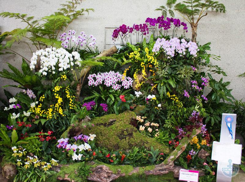 フラワーショップ蘭らん(沖縄熱帯植物管理株式会社)「森の目覚め」