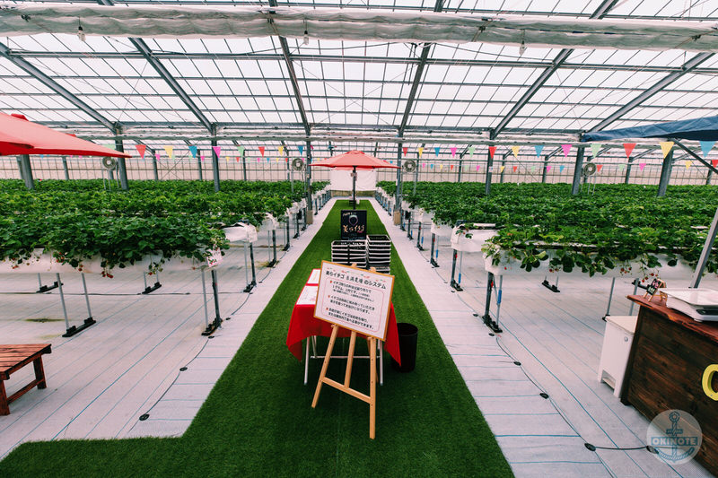 糸満市「美らイチゴ糸満農園」