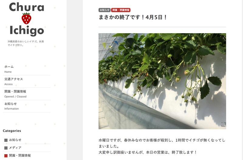 美らイチゴ糸満農園の開園情報