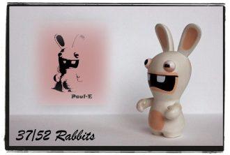 rabbit37
