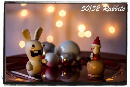 rabbit50