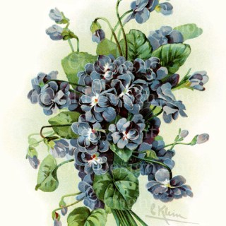 New Vintage Image of Blue/Purple Flowers in my Etsy Shop