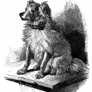 Dog Sketch Free Vintage Clipart