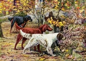 gordon setter, irish setter, english setter, free vintage image dogs, the book of dogs, vintage dog illustration, free digital graphics pets