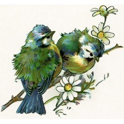 Small Crop Of Birds On A Branch