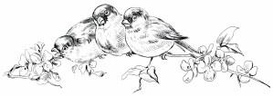 vintage birds clipart, birds on branch, black and white bird graphic, free vintage image bird, antique bird illustration