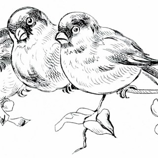 Free Vintage Image ~ Birds on Branch Clipart