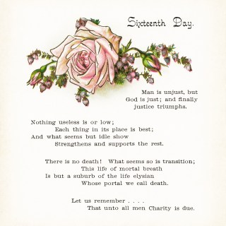 Sixteenth Day Poem with Rose Illustration