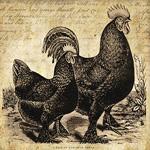 Rooster & hen 5x5 in ~ lilac-n-lavenderSM