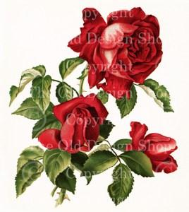 red roses, dell and bower, vintage floral image, susie barstow skelding, vintage rose illustration