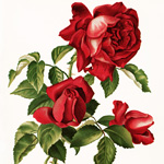 New Items in my Etsy Shop ~ Vintage Roses
