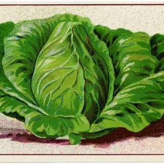 Free Vintage Image ~ French Cabbage Seed Packet Label