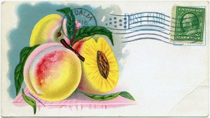 vintage garden, vintage postcard, free digital graphics, vintage fruit illustration, vintage clipart peach