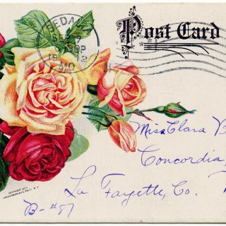 Free Vintage Image ~ Archias' Seed Store Roses Postcard
