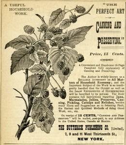 vintage canning ad, raspberries clipart, antique magazine advertisement, free vintage clip art fruit, aged digital paper