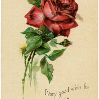 Free Vintage Image ~ Red Rose Birthday Postcard