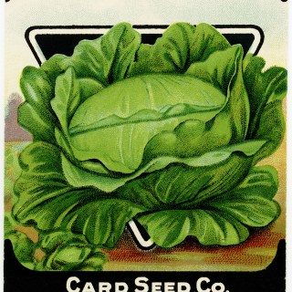 Free Vintage Image ~ Card Seed Co. Cabbage Packet