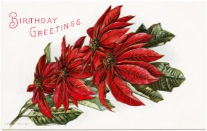 vintage poinsettia image, december birthday, free vintage christmas clipart, antique poinsettia postcard, old fashioned christmas graphics