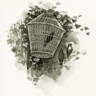 Free Vintage Image ~ Birds and Birdcage