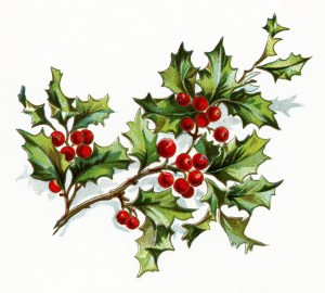 vintage christmas flower, holly and berries image, vintage floral clipart, old fashioned holiday clip art, christmas holly printable graphic