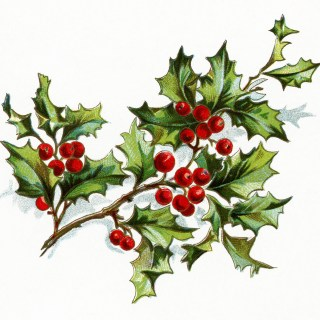 Free Vintage Image ~ Holly and Berries