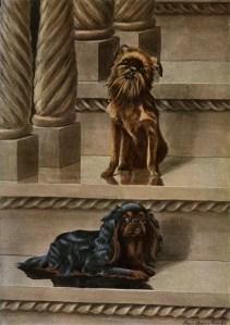 vintage dog image, louis agassiz fuertes, brussels griffon illustration, king charles spaniel graphic, printable dog art