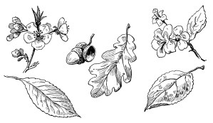 vintage leaf clipart, old school lesson, leaves and blossoms clip art, black and white image, leaf blossom flower acorn illustration