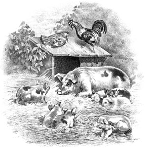vintage farm animals image, pig piglet rooster hen illustration, black and white clip art, old fashioned farm graphic, farmyard scene illustration