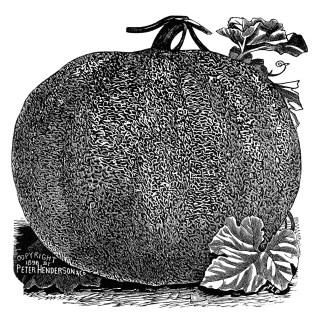Vintage Pumpkin Clip Art ~ Free Graphics