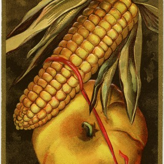 Free Vintage Image ~ Thanksgiving Greetings Corn and Pumpkin Postcard