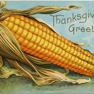 Free Vintage Image ~ Corn Thanksgiving Greetings Postcard