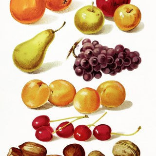 Page of Fruit and Nuts ~ Free Vintage Image