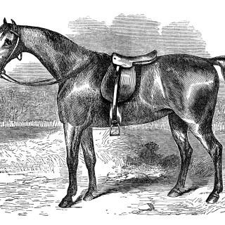 Vintage Horse Covert Hack ~ Free Clip Art