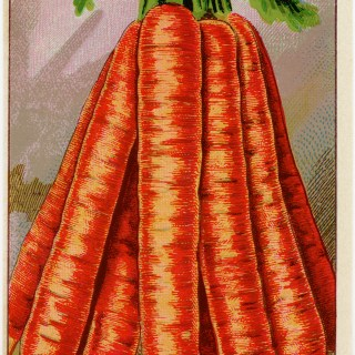 Carrots French Seed Packet Label ~ Free Vintage Image