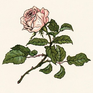 Kate Greenaway Pretty Pink Rose ~ Free Vintage Storybook Image