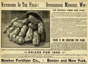 black and white clipart, vintage garden clipart, potato illustration, old magazine ad, basket of potatoes