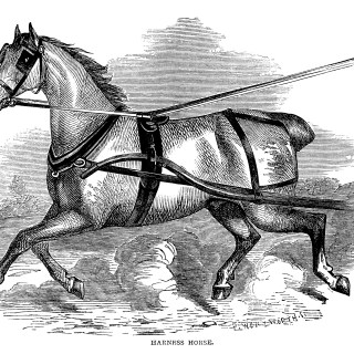Harness Horse ~ Free Vintage Clip Art