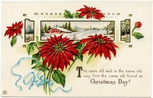 Stecher Christmas postcard, public domain Christmas image, vintage poinsettia clip art, winter flower graphics, printable Christmas illustration