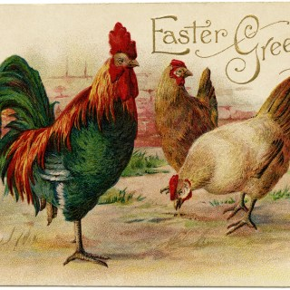 Rooster and Hens ~ Free Vintage Postcard Image