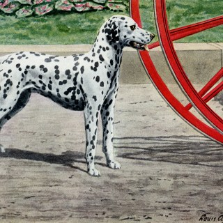 Dalmatian Dog Illustration