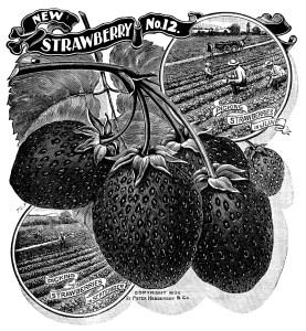 OldDesignShop_Pg172StrawberriesBW