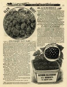 OldDesignShop_Pg173StrawberriesBlackberries