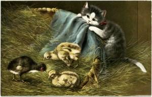 kitten and chicks, vintage postcard, vintage kitten postcard, baby chick graphics, farm animals clip art, cat in barn illustration